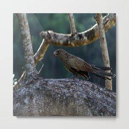 Baby Swamp Pheasant Metal Print