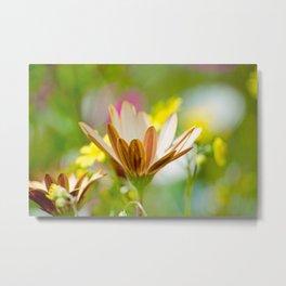 Pastel Meadow Metal Print