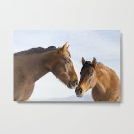 Modern Horse Photo in Color Metal Print