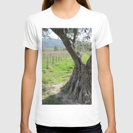 Olive tree in vineyard T-shirt