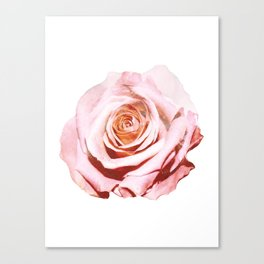 Photomanipulation | Pink Rose Canvas Print