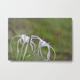 Spider Lily #3 Metal Print