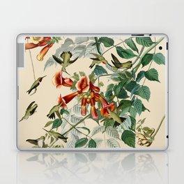 Vintage Hummingbird Illustration - Birds of America Laptop & iPad Skin