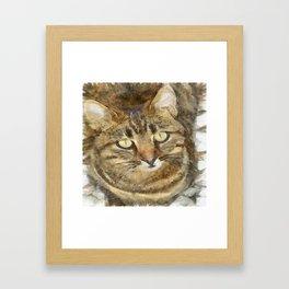 Cute Tabby Looking Up Framed Art Print