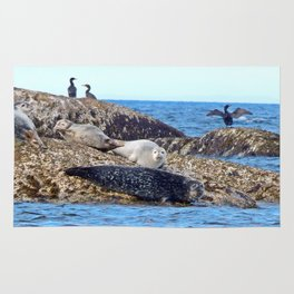 Seals resting on the Rocks Rug