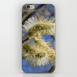 WILLOW CATKINS  iPhone Skin