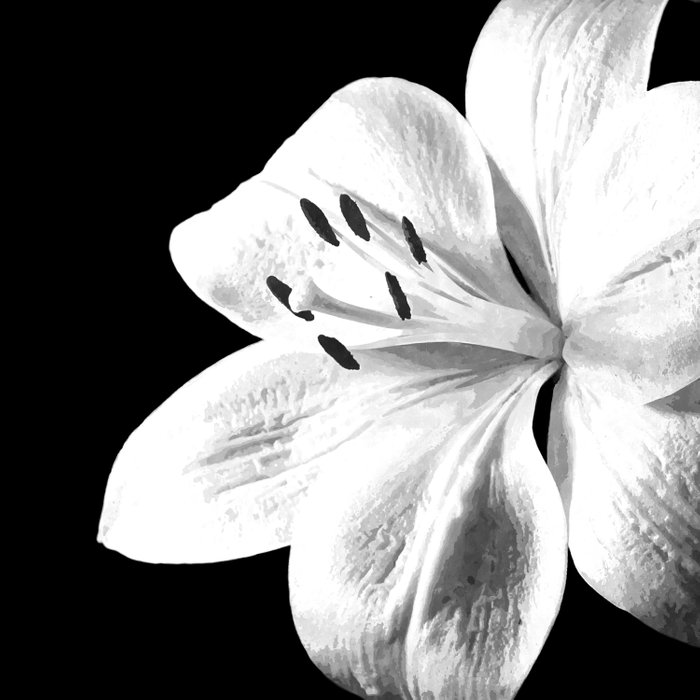 White Lily Black Background Comforters