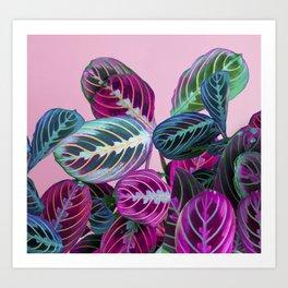 Prayer Plants on a Pink Art Print
