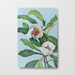 Franklin tree flowers Metal Print