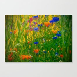 Colours and Cornflowers Canvas Print