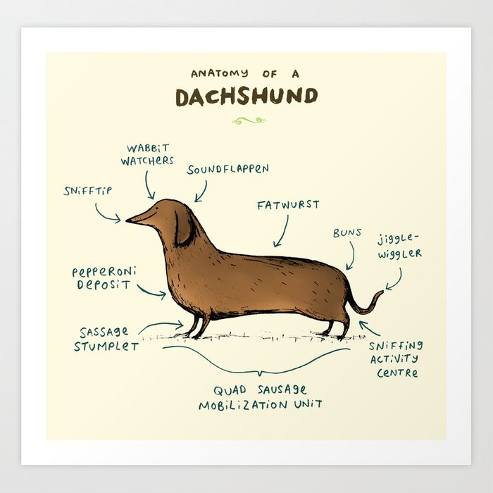 Anatomy of a Dachshund Art Print by sophiecorrigan | Society6