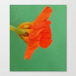 Herbaceous Canvas Print