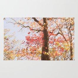 October Colors Rug