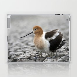 American Avocet mother protecting babies Laptop & iPad Skin