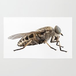 Large marsh horsefly species Tabanus autumnalis Rug