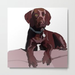 Chocolate Labrador Metal Print