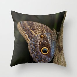 Owl butterfly in Costa Rica - Tropical moth Throw Pillow