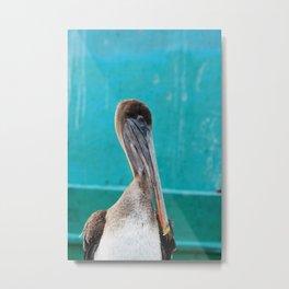 Galapagos Brown Pelican 1 Metal Print
