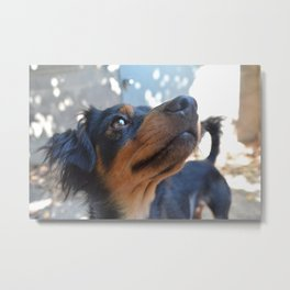 Chalie or Charly is one beatiful dog Metal Print