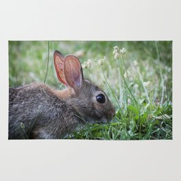 Eastern Cottontail Rabbit Rug