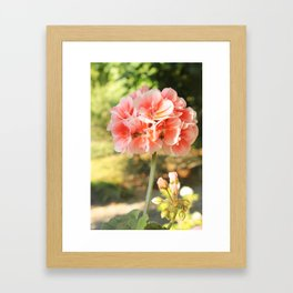 Morning Bloom Framed Art Print
