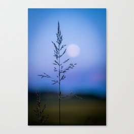 Tall Grass in Spring Canvas Print