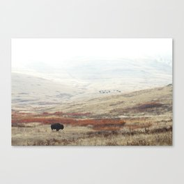 Lone Bison on National Bison Range in Montana Canvas Print