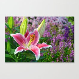 Pink stargazer lily Canvas Print