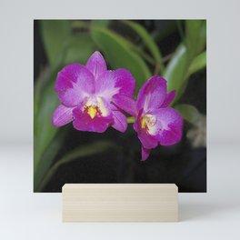 Magnificent Magenta Orchid - Ctna Capri Mini Art Print