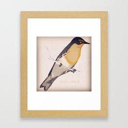 Grace's Warbler Framed Art Print