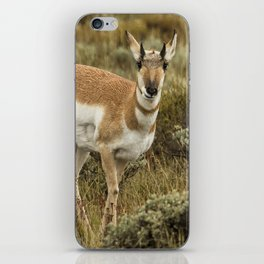 Pronghorn At Gros Ventre - Grand Tetons iPhone Skin