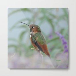 Allen's Hummingbird Sentinel Metal Print