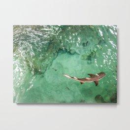 Look at the Shark Metal Print