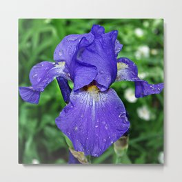 Cool blue-violet Iris 'Sea Master' Metal Print