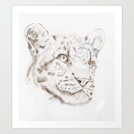 Tiger sketch, realistic drawing, pencil, black and white, animals, nature, art Art Print