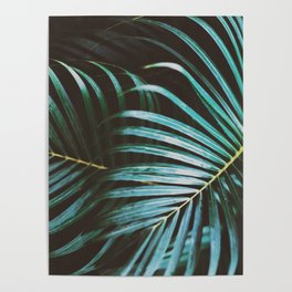 Palm, Leaves, Tropical, Plant, Nature, Modern art, Art, Minimal, Wall art Poster