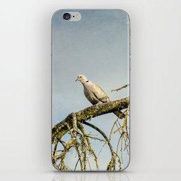 Eurasian Collared Dove iPhone Skin