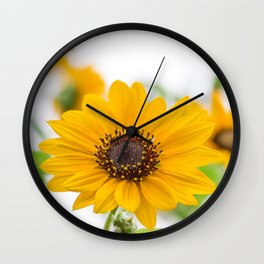 sunflower in midsummer Wall Clock