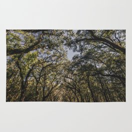 Wormsloe Live Oak Avenue - Savannah III Rug