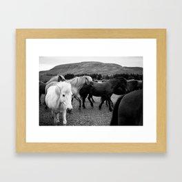 Herd of Horses Framed Art Print