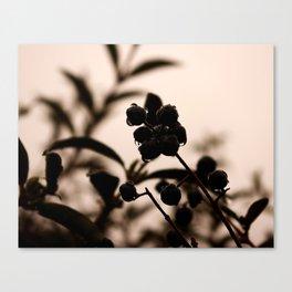 raindrops and hedge berries Canvas Print