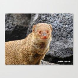 Mongoose Canvas Print