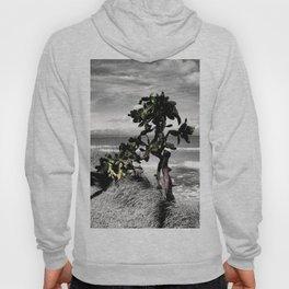 The Catus Tree Siesta Key Beach Hoody