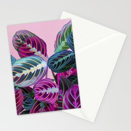 Prayer Plants on a Pink Stationery Cards