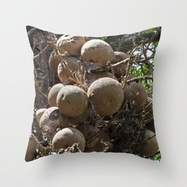 Cannonball Tree Fruit Throw Pillow