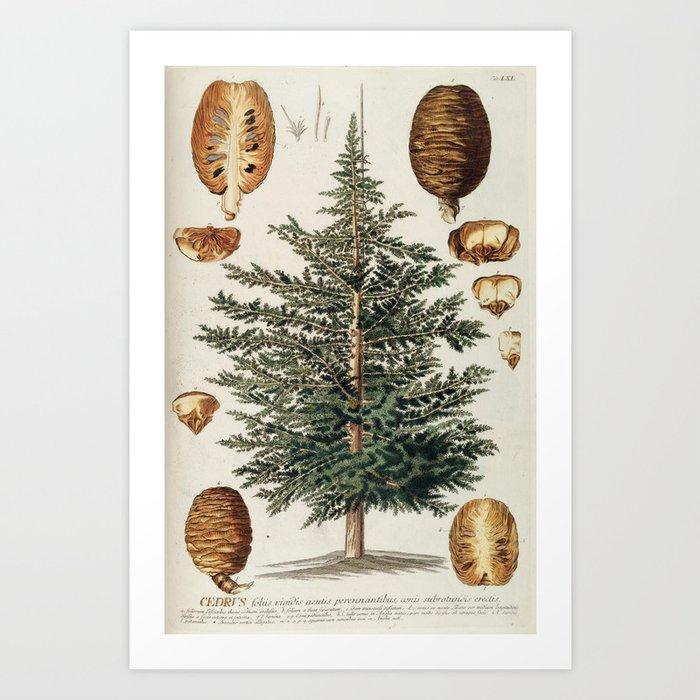 Vintage cedar tree illustration art print by baconfactory society6 vintage cedar tree illustration art print altavistaventures Gallery
