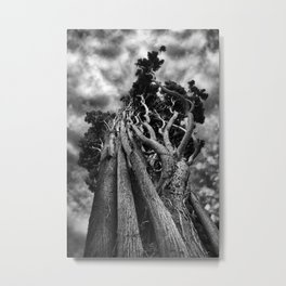 Clawing The Skies Metal Print