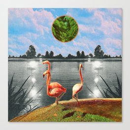 The flamingos Canvas Print