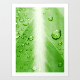water and plant Art Print