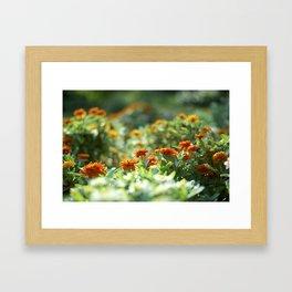Flower under the Sun Framed Art Print